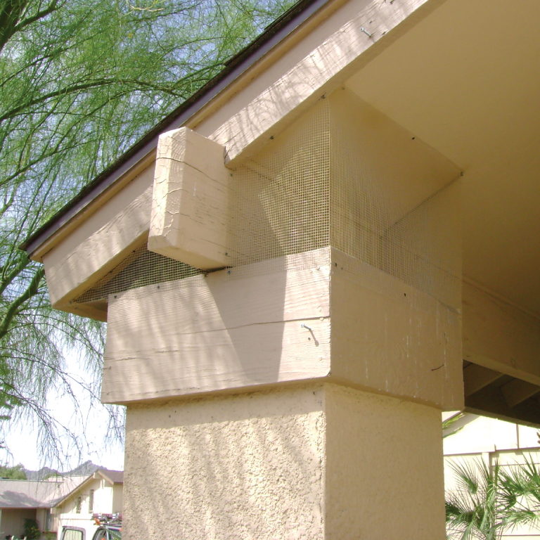 Pigeon removal from pillars in Arizona