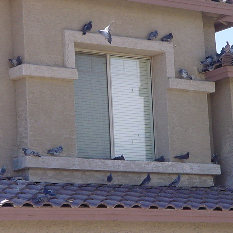 Pigeons sitting on decorative popouts around a window on a house in Arizona