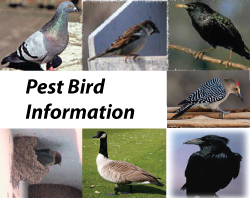 pest bird control near me